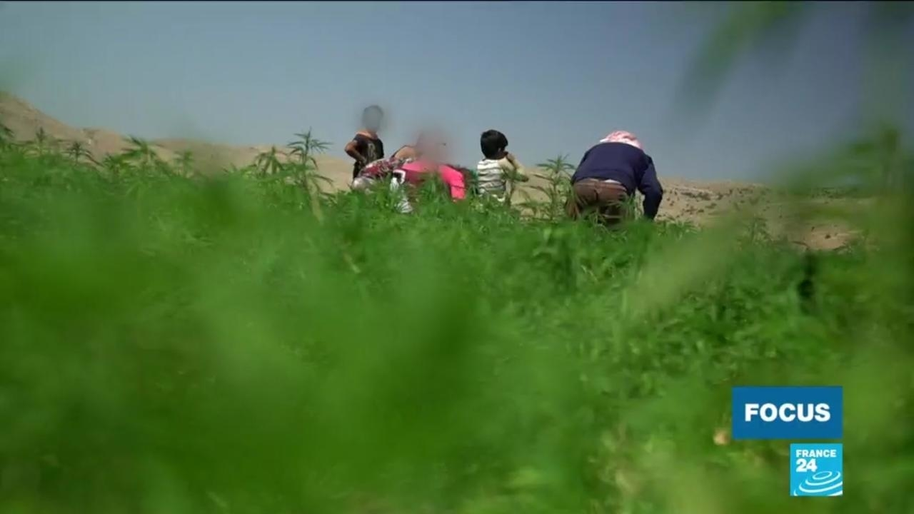 Photo of In Lebanon's Beqaa Valley, locals divided over legalisation of medical marijuana