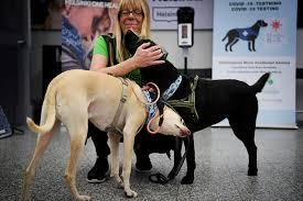 Photo of Helsinki: Coronavirus-sniffing Dogs Could Provide Safer Travel