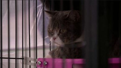 Photo of Cats auctioned off as crime assets at Thai police sale
